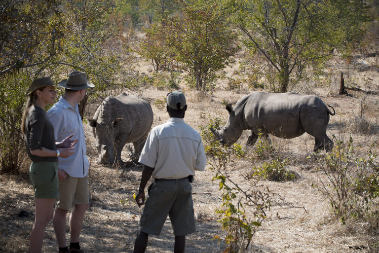 the exceptional opportunity to track white rhino