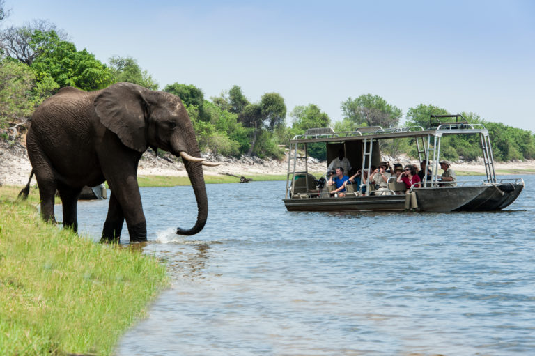 Elephant sighting up close on the Zambezi Queen
