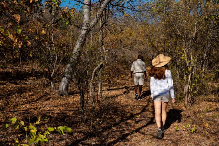 Professional guides take Zambezi Queen guests for a guided bush wa