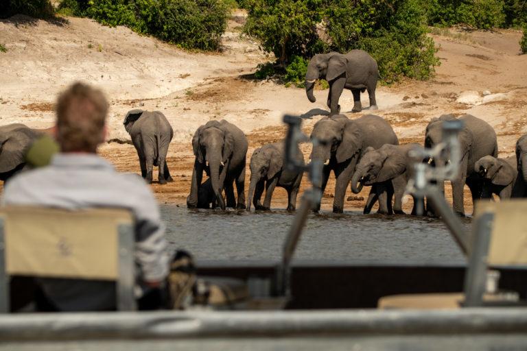 Zambezi Queen photography boat viewing close up elephants
