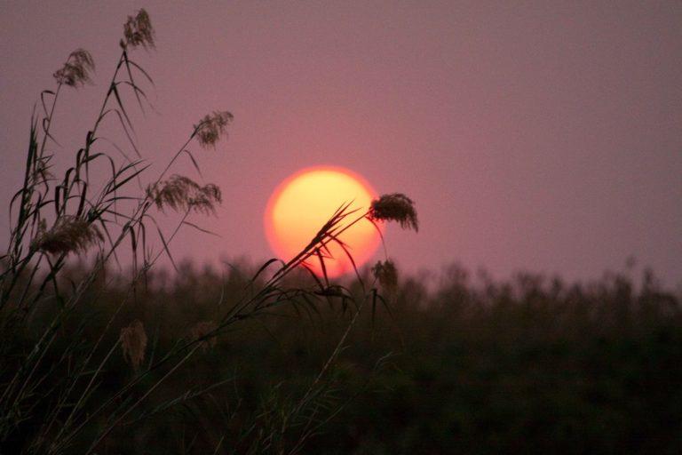 Kubu Queen sunset in the Delta