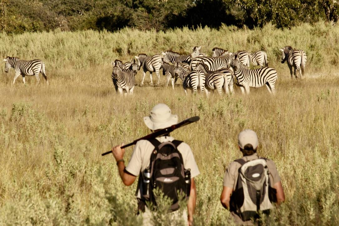 Walking safaris in the Okavango Delta