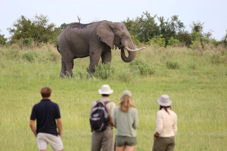 Magnificent elephant encounter on safari with David Foot Safaris