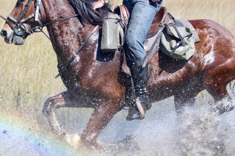 David Foot Safaris canter through the water