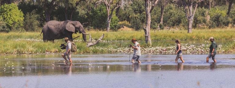 Wading through the Okavango Delta waters with Walk Botswana Safaris
