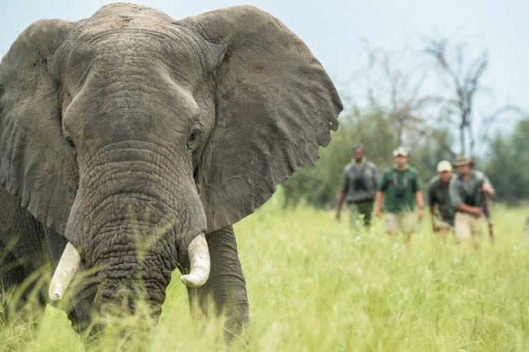 Discover South East Okavango on safari with Walk Botswana