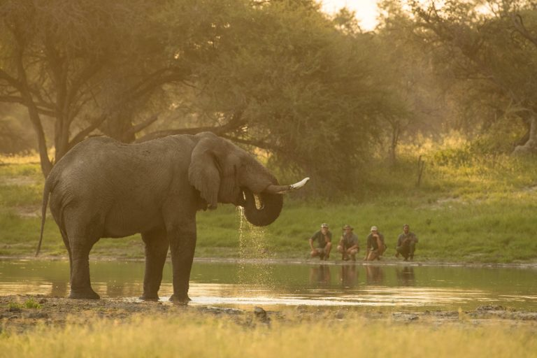 A quiet moment watching an elephant drink at sunset