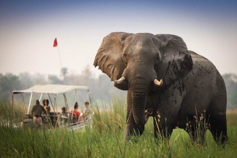 Elephant bull greets guests on Endeavour safaris boat adventure