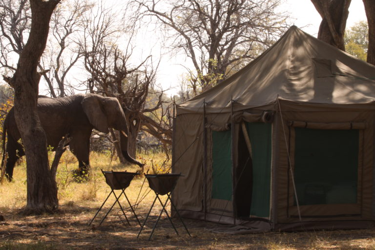 Elephant visitor to the Endeavour Safaris Camp