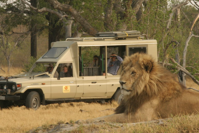 Lion sighting with Endeavor Safaris in the Okavango Delta