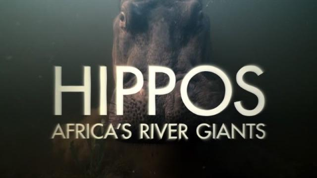 Hippos Africans River Giants