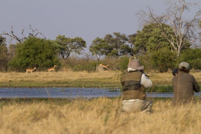 Photographic safari in BOtswana
